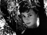 Audrey Hepburn壁纸桌面图片