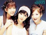Shinvi写真图片